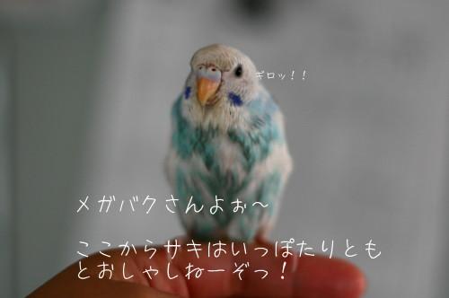 b0143835_143066.jpg