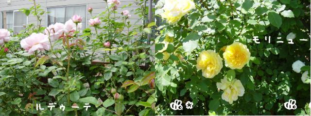 d0020136_11545818.jpg