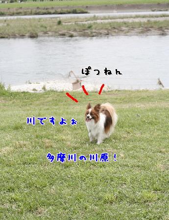 d0013149_921588.jpg