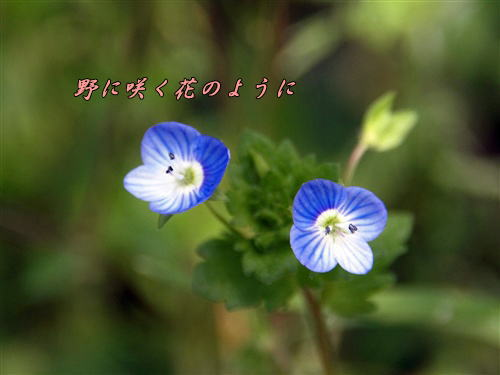 e0010350_1051817.jpg