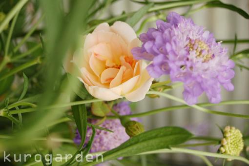 蝶とバラと_e0119151_19455449.jpg