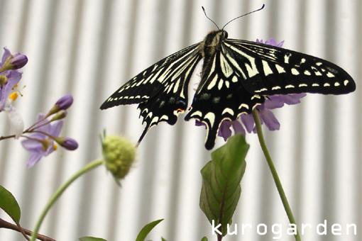 蝶とバラと_e0119151_19464847.jpg