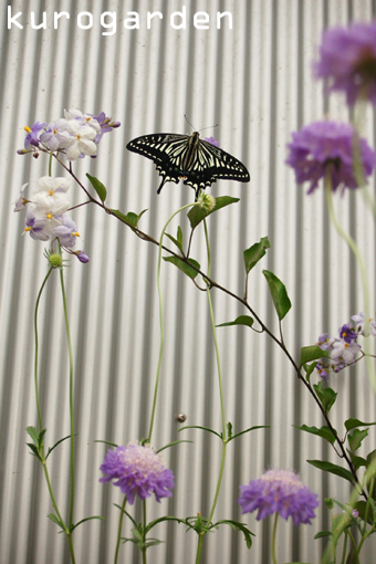 蝶とバラと_e0119151_1947196.jpg