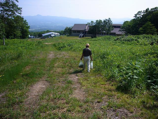 ニセコでワラビ採り_f0138096_9581046.jpg