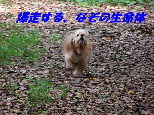 b0067012_21161970.jpg