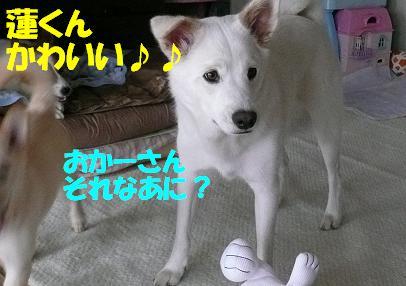 f0121712_17222724.jpg