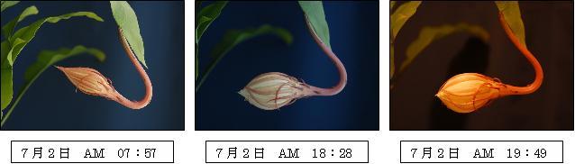 c0044021_172884.jpg