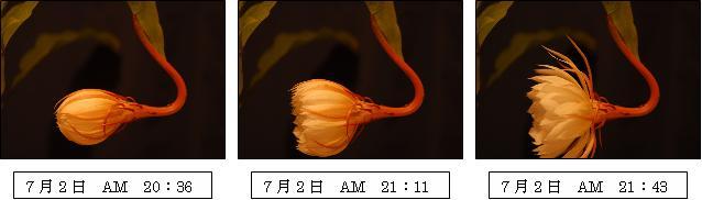 c0044021_174561.jpg