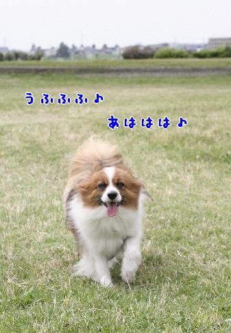 d0013149_108139.jpg