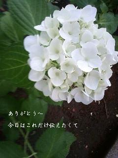 f0053374_22131170.jpg