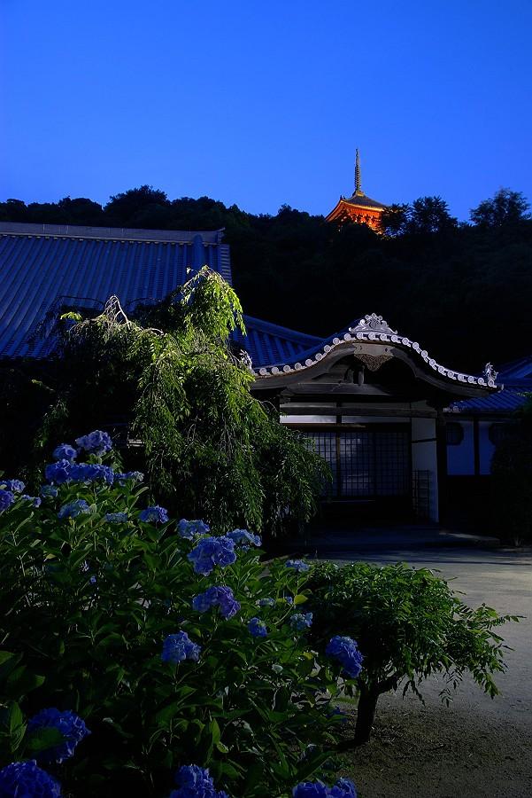 古寺に咲くアジサイ_c0152379_21274037.jpg