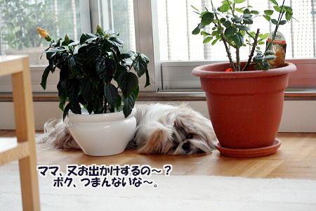 ソルド&ランチ~♪_c0090198_4302565.jpg