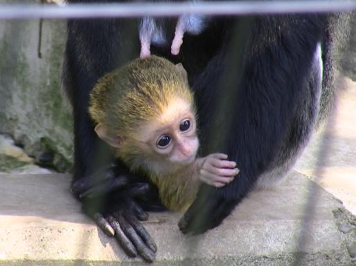 ブラッザグェノンの赤ちゃん_c0155902_0191036.jpg