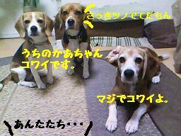 b0098660_11233034.jpg
