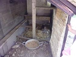 小さな母鶏と小さな小さなヒヨコを見ました_f0106597_5363619.jpg