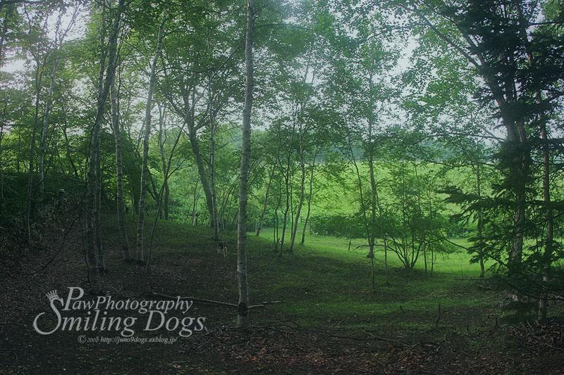 Forest_f0116805_18305017.jpg