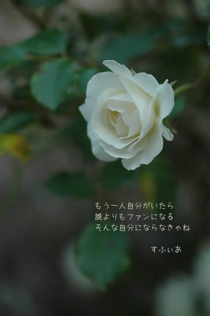 b0152416_23563333.jpg