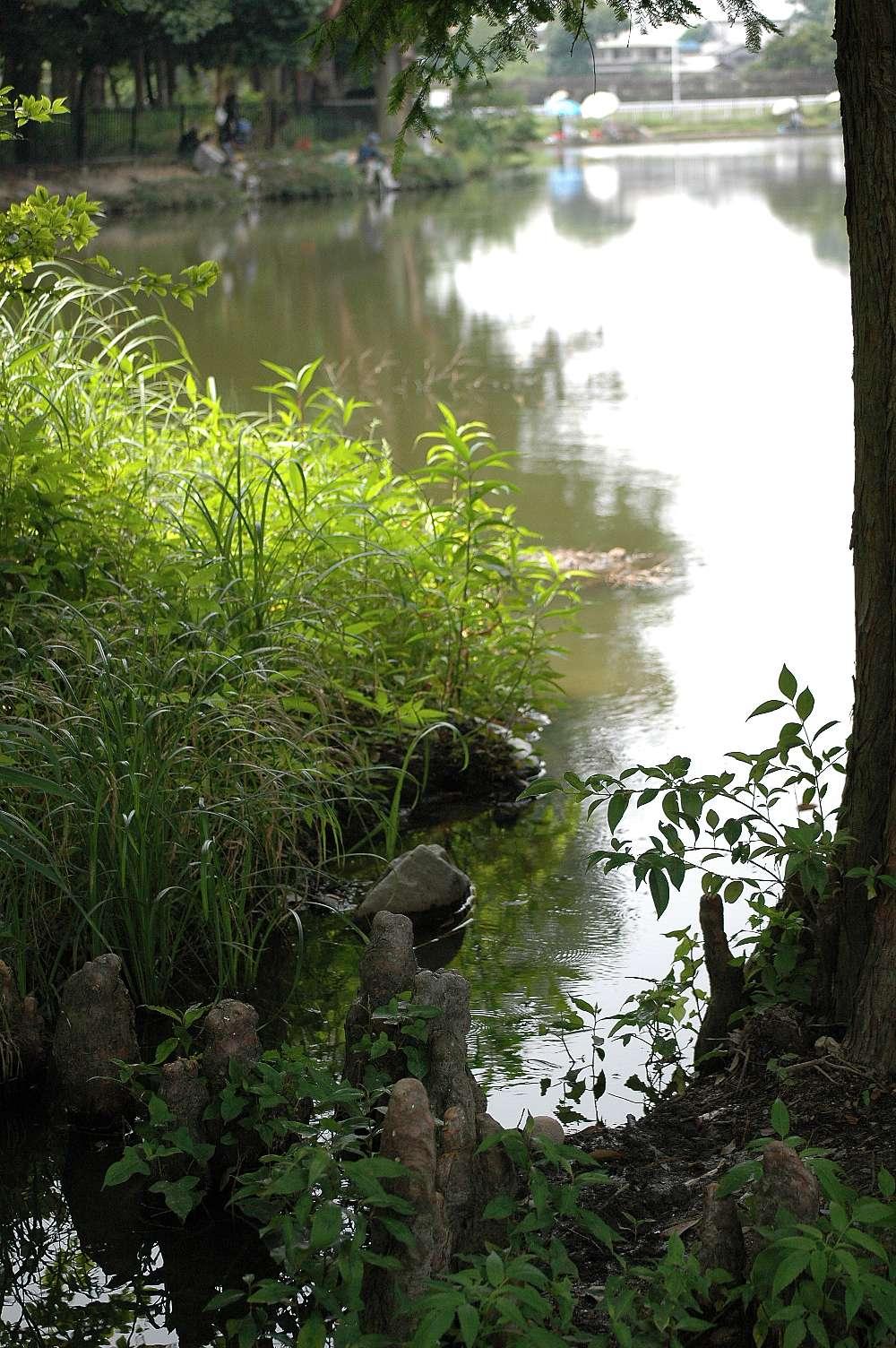 暑すぎる緑地公園で_b0069128_15552412.jpg