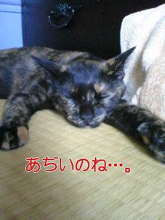 f0091785_13562450.jpg