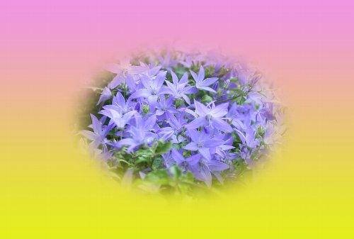 b0136812_16059100.jpg