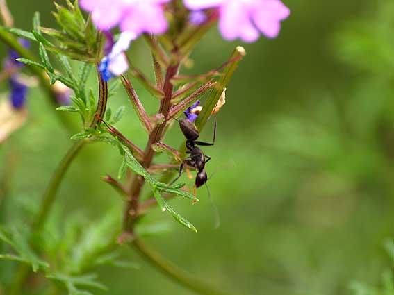 蟻と花_d0149245_2234122.jpg