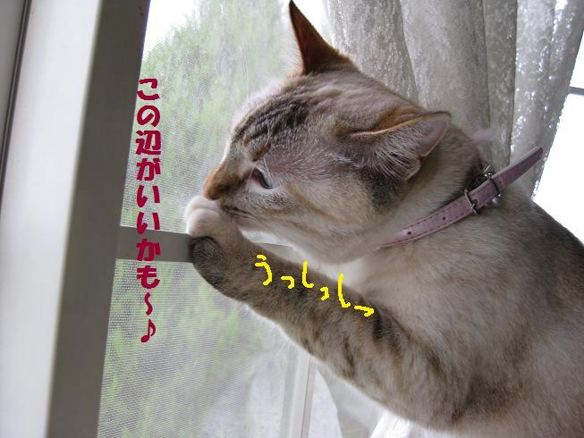 b0151748_13421581.jpg