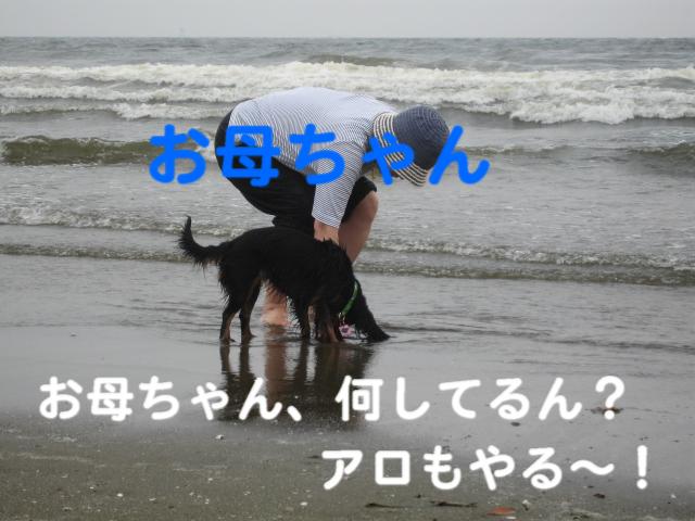 a0101958_16452535.jpg