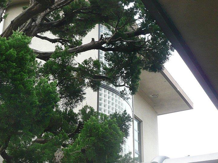 京都府立鴨沂高校(おうきこうこう)_c0112559_16243055.jpg