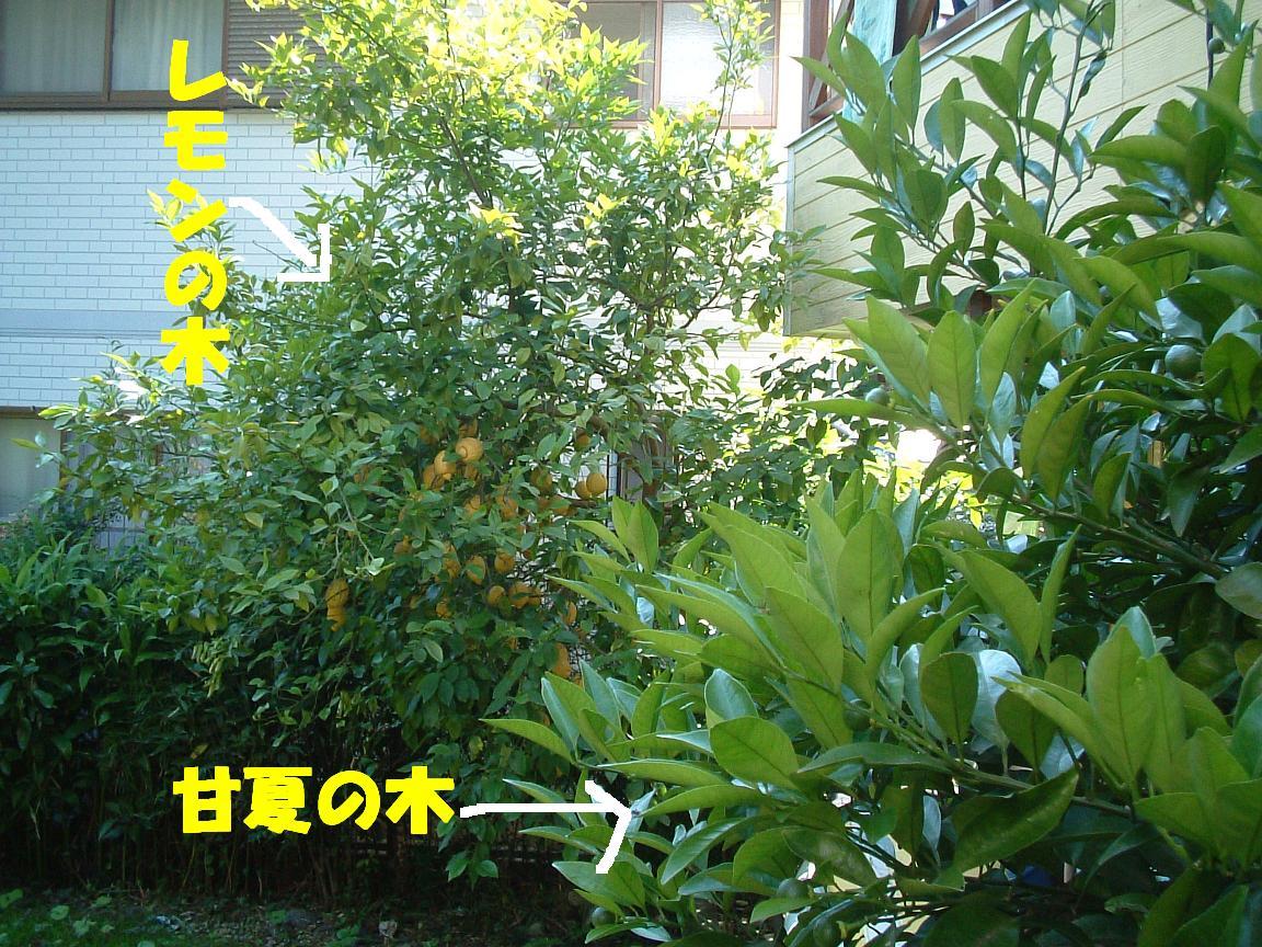 b0069163_16465759.jpg