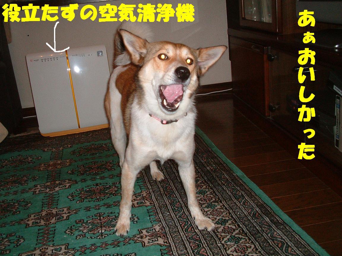 b0069163_16504176.jpg