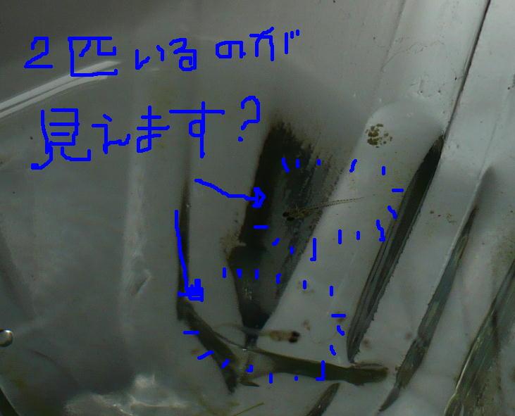 f0050468_12284872.jpg