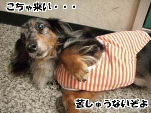 d0020869_14581047.jpg