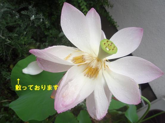 c0098501_9193377.jpg