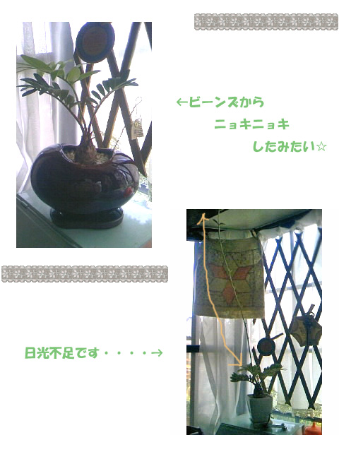 d0037001_7575777.jpg