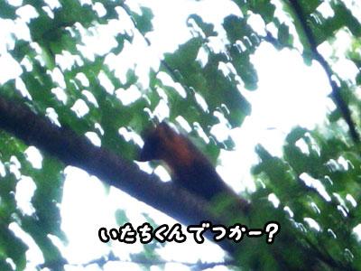 f0129214_1353552.jpg