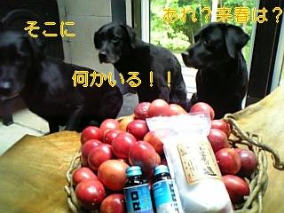 f0148927_18551299.jpg