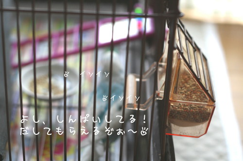 b0143835_1372869.jpg