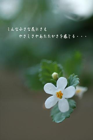 f0071242_17284199.jpg