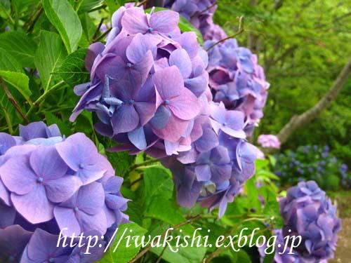 f0105342_13414451.jpg
