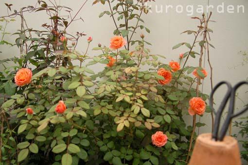 植物の恩恵_e0119151_17235895.jpg