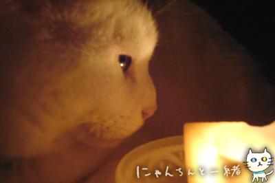 キャンドルナイト最終日_e0031853_19501131.jpg