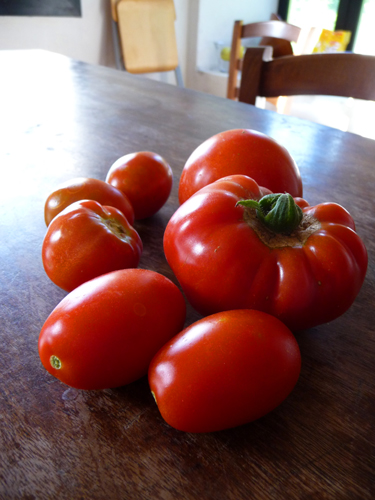 今年の初トマト!_f0106597_22594597.jpg