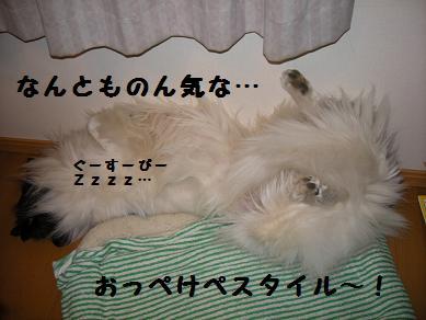 f0081100_167388.jpg