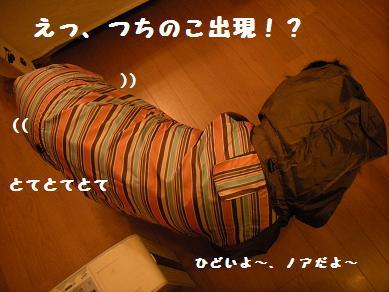 f0081100_1682886.jpg