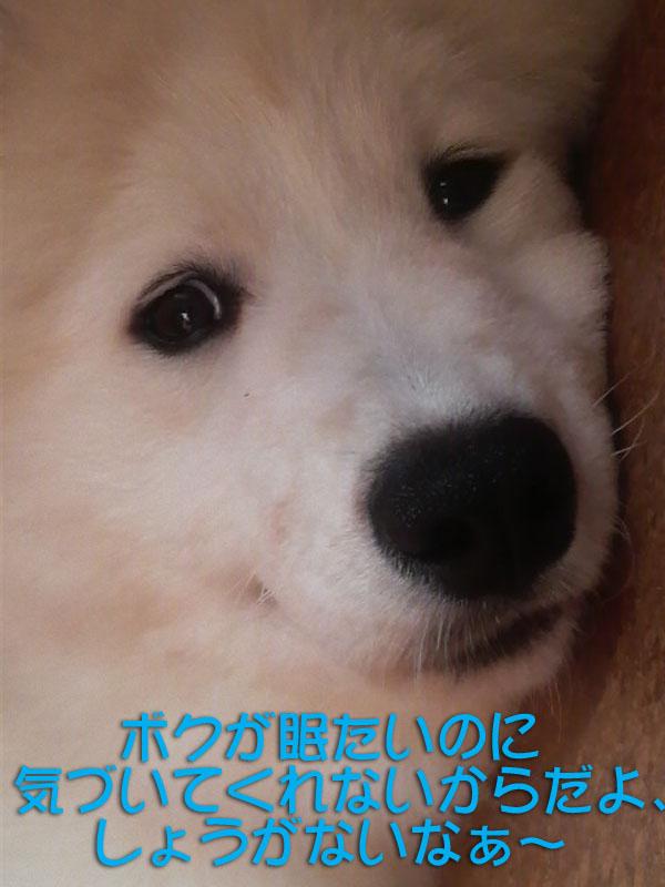 b0146024_16393491.jpg