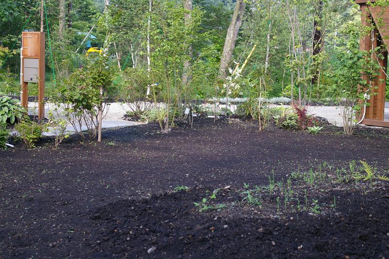 野芝の種を蒔いたところ : 森の扉