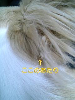f0148927_1921330.jpg