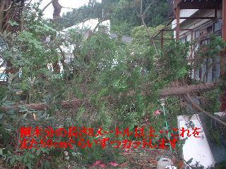 f0031037_2184241.jpg