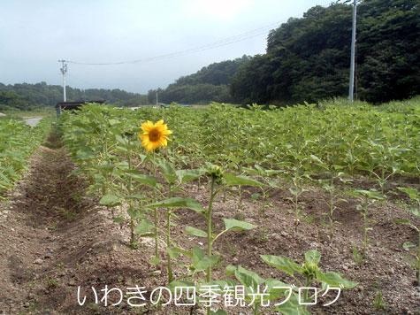 f0105342_1456763.jpg