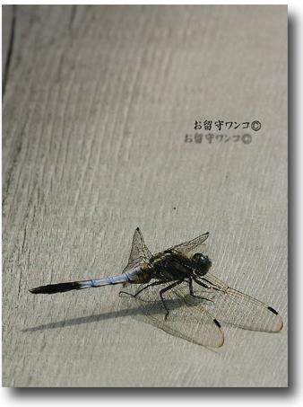 f0111147_16205665.jpg